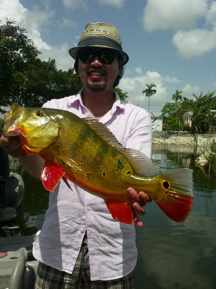 South florida bass fishing reports blog search results for Peacock bass fishing miami