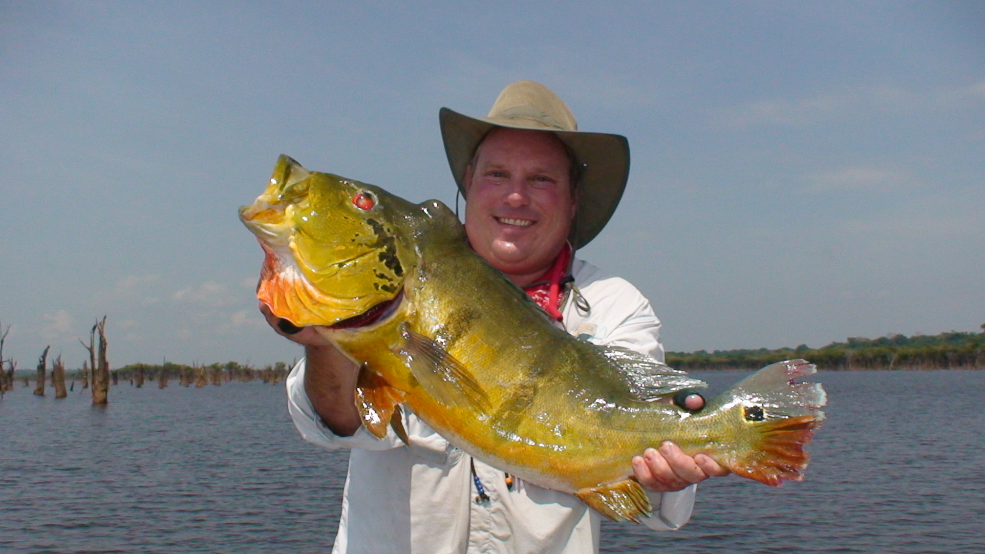South florida bass fishing reports blog amazon peacock for Bass fishing trips