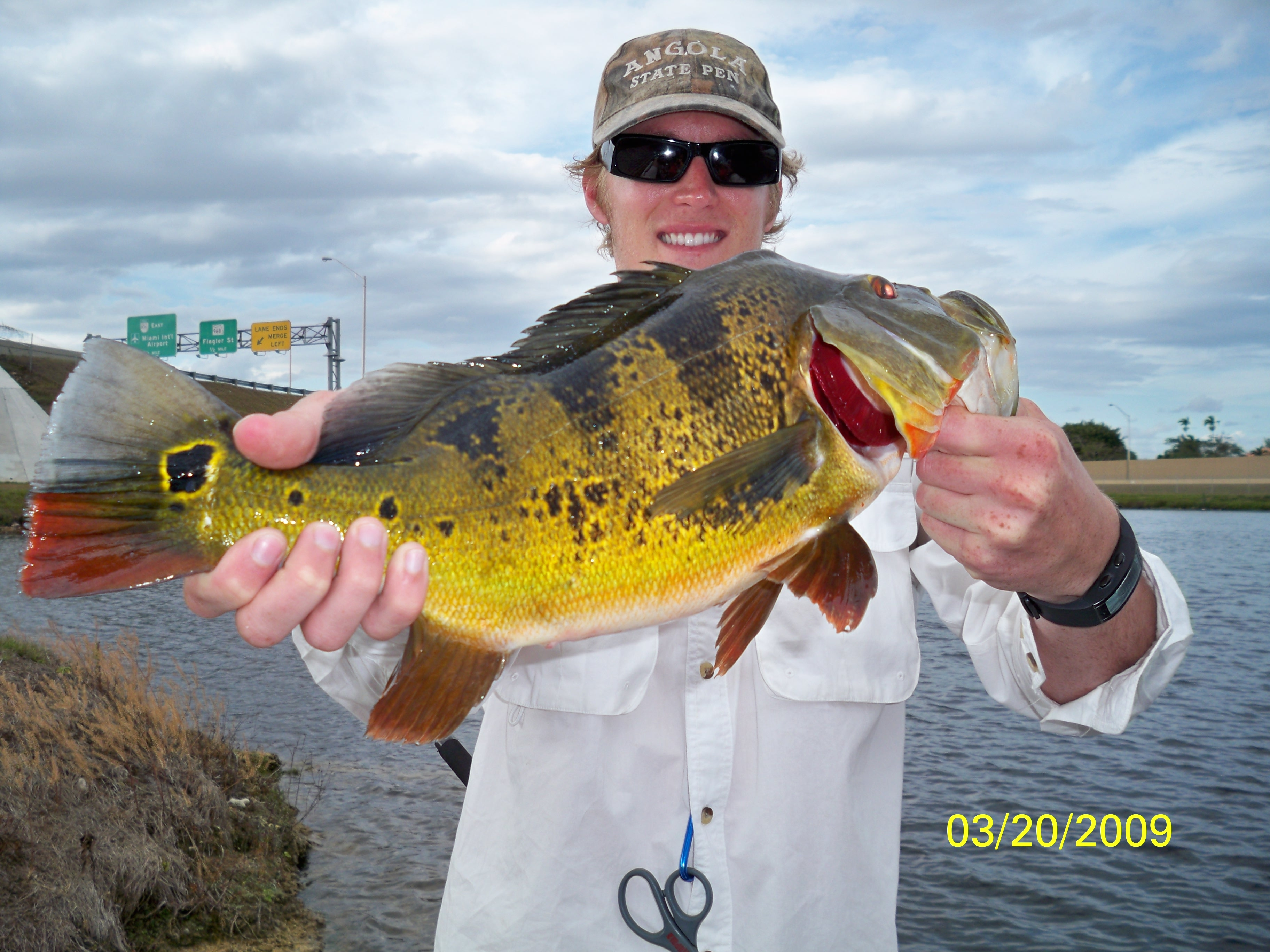 south florida bass fishing reports | blog » miami peacock bass, Fishing Reels